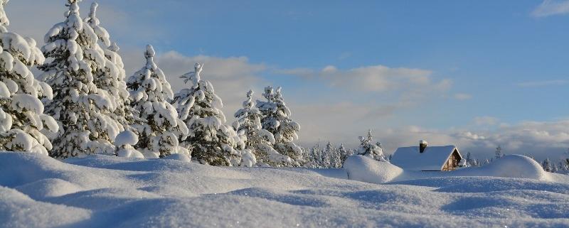 Fit in den Winter mit Krillöl und Vitamin D